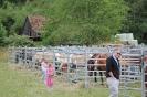 Der historiche Kaufmannszug zu Gast in Eisenbach 084